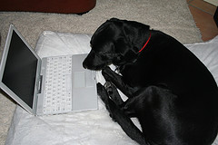 computer dog